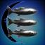 Reel Wild Salmon Charters