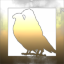 Parakeet Industries