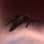 Scorpionfly Apis