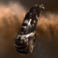Blood Raider