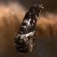 Corpii Reaver