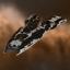Imperial Agatho