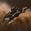 Amarr Arbitrator Cruiser