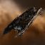 Amarr Archon Carrier